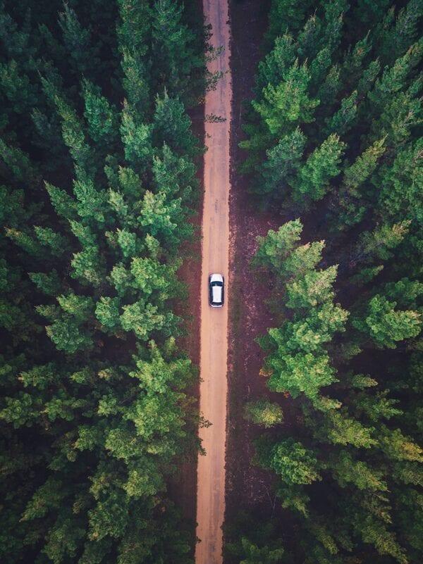 Bil kör i skog